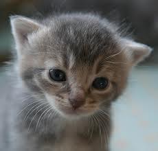 gatos recem nascido