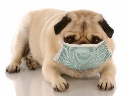 Alergias em Cães